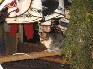 Kissa joulutorilla.