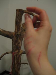 Haavoja ja raapimispuu.