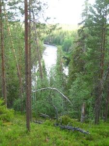 Savinajoki